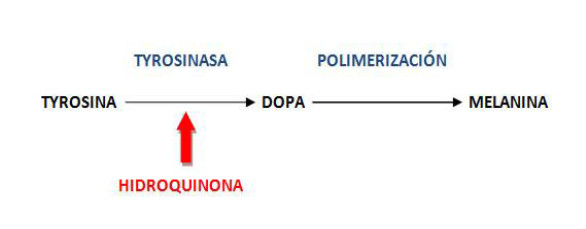 Hidroquinona: propiedades fisicoquímicas e incorporación